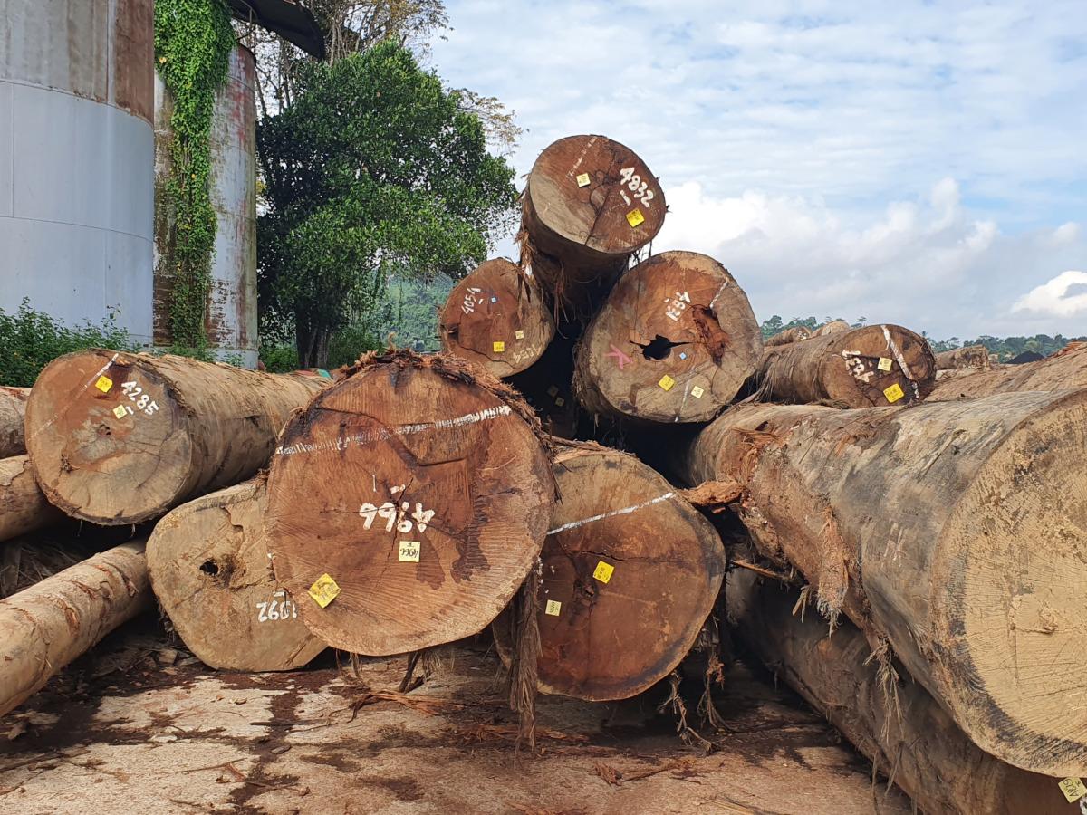 High End, Legal Tropical Wood